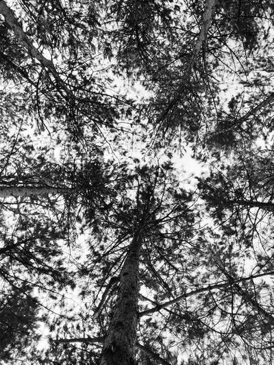 Into the woods Blackandwhite Black And White Black And White Black & White Black And White Photography VSCO Nature_collection Nature Photography EyeEm Nature Lover EyeEm Gallery EyeEm Selects Tree Full Frame Nature Plant Day Backgrounds No People Outdoors Growth Sunlight Beauty In Nature Low Angle View Branch Pattern Tranquility Sky Textured