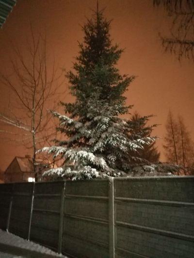 Tree Winter Bare Tree Cold Temperature Snow Sky Landscape