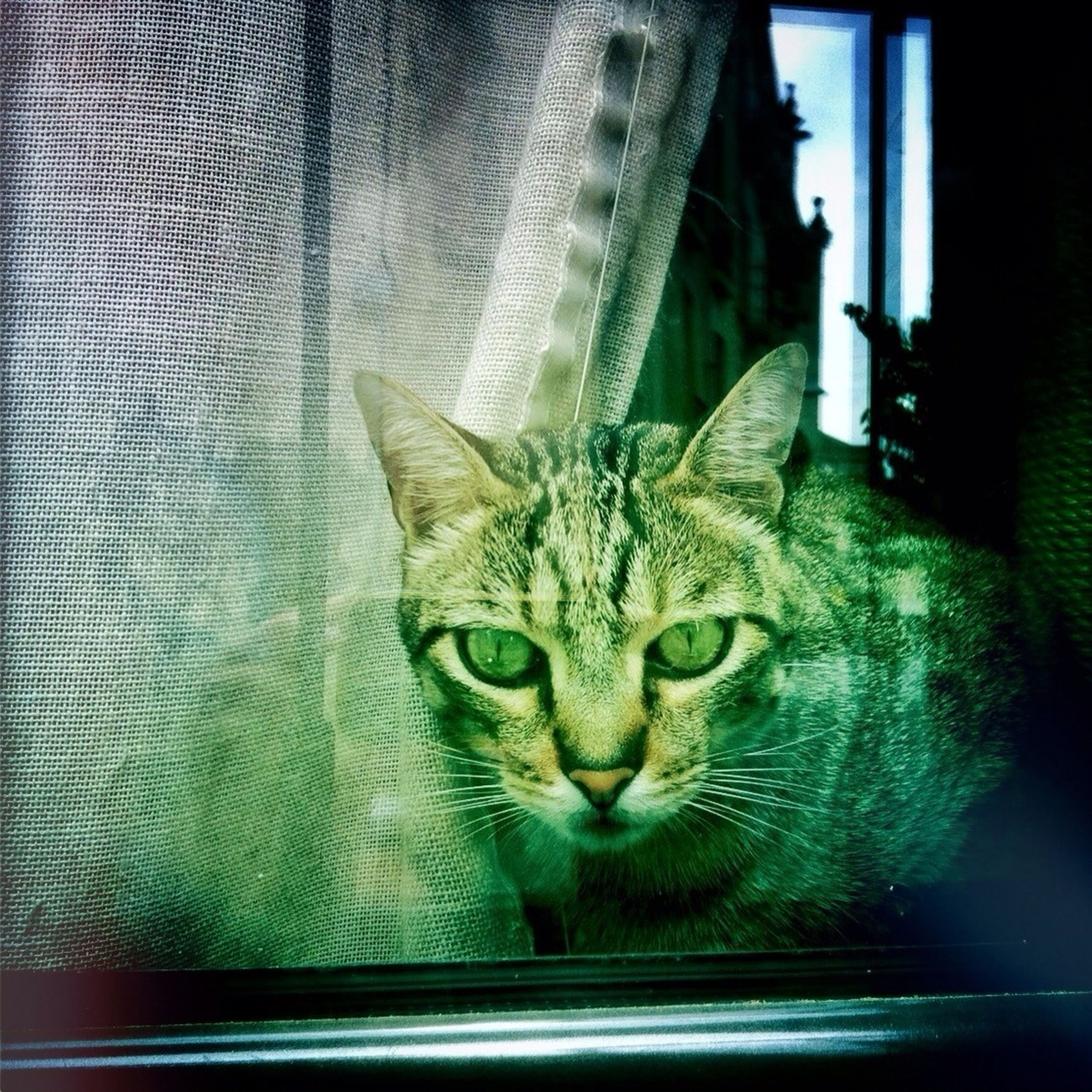 indoors, domestic cat, cat, pets, domestic animals, one animal, animal themes, mammal, feline, whisker, portrait, close-up, looking at camera, home interior, relaxation, animal head, window, no people, staring, home