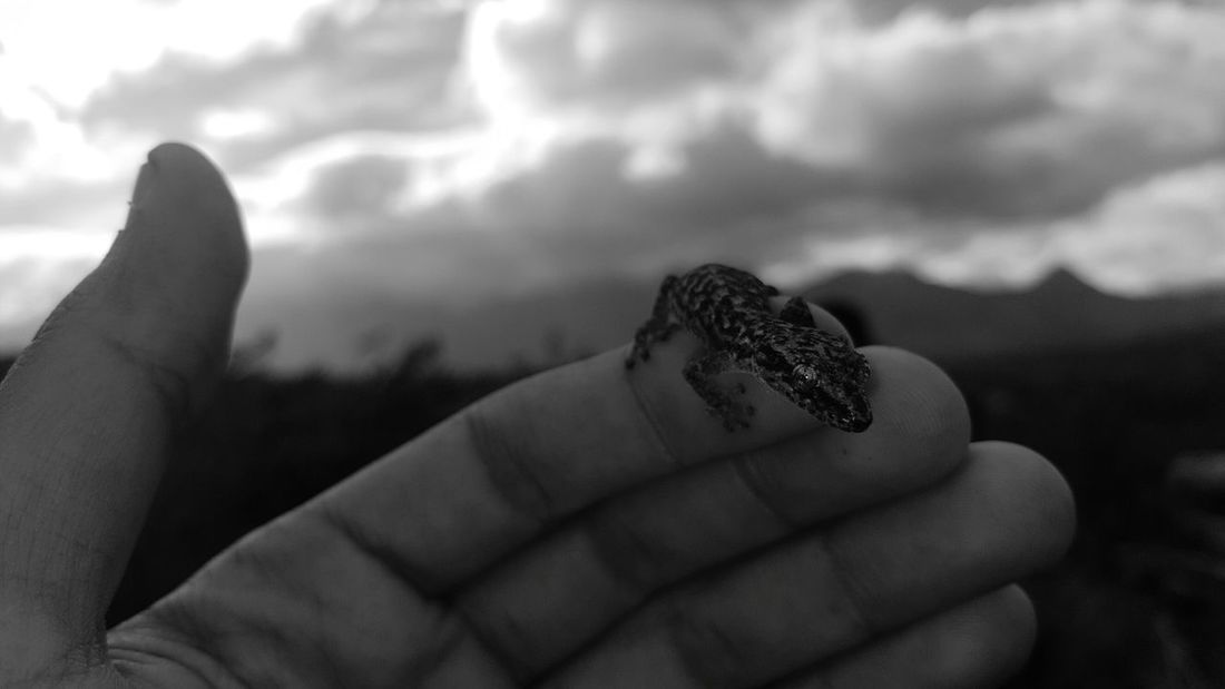 Human Body Part Human Hand One Animal One Person Animal Wildlife Animal Themes Animals In The Wild Day Nature Close-up Sky Gecko