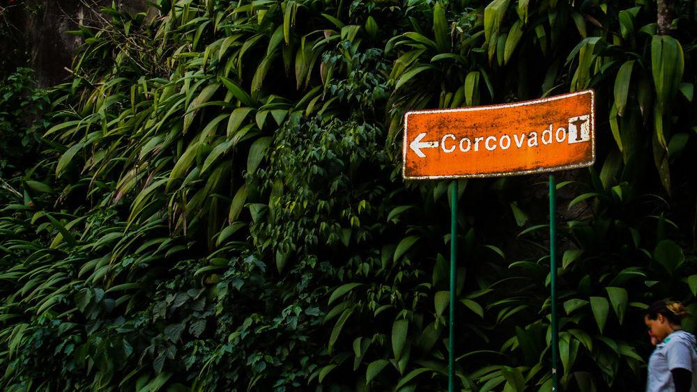 Green Color Nature Plant Travel Photography Travellover EyeEmNewHere Beautiful Nature Corcovado National Park Corcovado Mountain Corcovado Hill Rio De Janeiro Eyeem Fotos Collection⛵ Rio De Janeiro, Brasil Perspectives On Nature