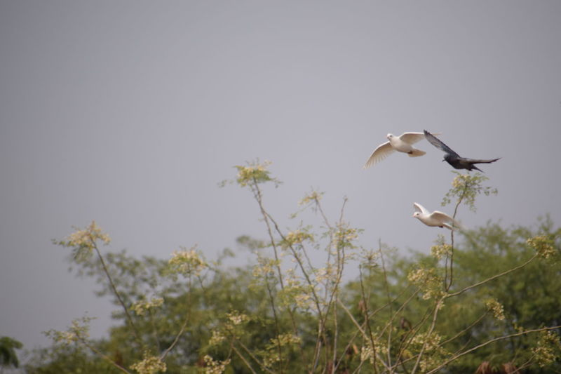 Fliying Birds Birds Nature