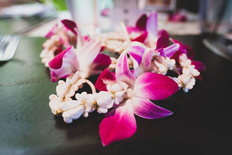 Beauty In Nature Close-up Day Flower Flower Arrangement Flower Head Flowering Plant Focus On Foreground Fragility Freshness Growth Indoors  Inflorescence Nature No People Orchid Petal Pink Color Plant Pollen Selective Focus Vulnerability