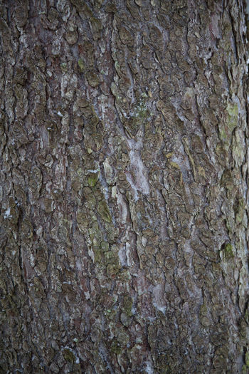 Backgrounds Built Structure Close-up Day Full Frame Nature No People Outdoors Pattern Rock - Object Rock Face Rough Textured  Tree Trunk