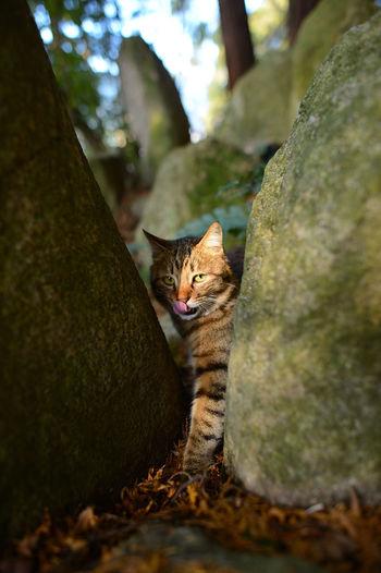 Portrait of cat on tree trunk
