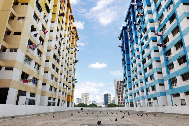 Birds on walkway amidst buildings in city