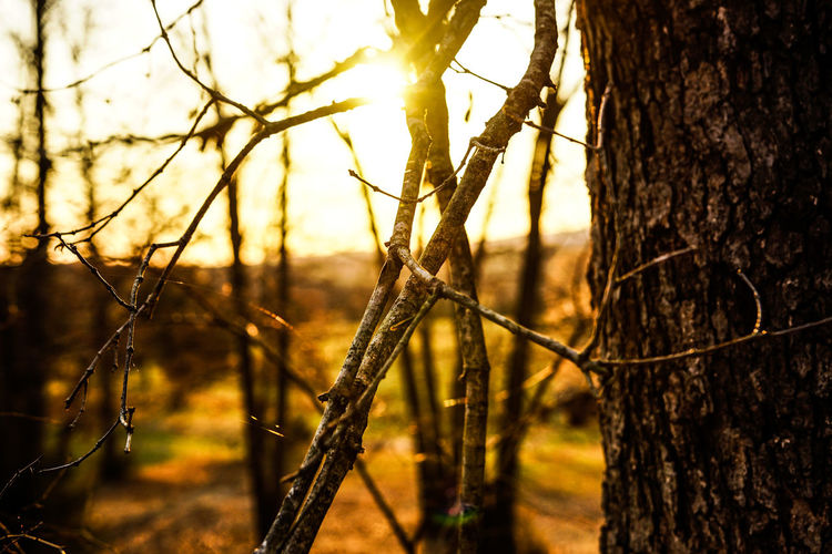 Tree Nature Grass Sky Outdoors Sunlight Protection Sunset No People Plant Sun Close-up Beauty In Nature Day Beauty In Nature Tree Branch Focus On Foreground
