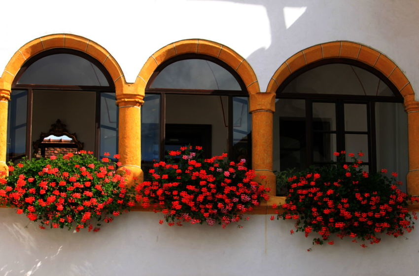 Slovenia Arch Arches Architecture Built Structure Day Flowering Plant No People Outdoors Radovljica Red September 2018 Yellow