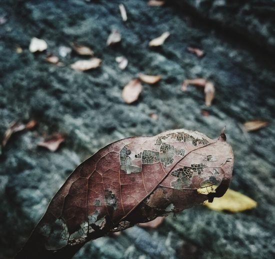 Close-up of dry leaf on land
