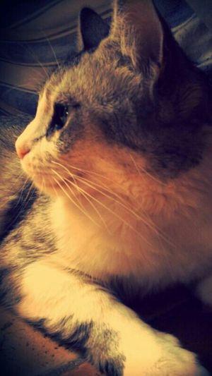 Cats Love Hello World @gbriel_mrq Goodnight repost ❤