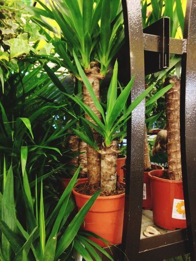 Growth Plant Green Color Potted Plant Nature No People Day
