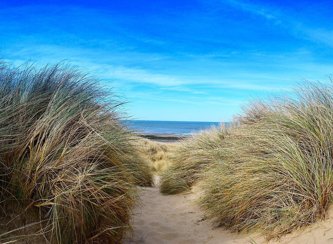 marram grass, beach, sand, sand dune, sea, nature, tranquil scene, grass, scenics, footprint, blue, beauty in nature, horizon over water, vacations, travel destinations, tranquility, sky, growth, water, day, outdoors, no people, plant, landscape