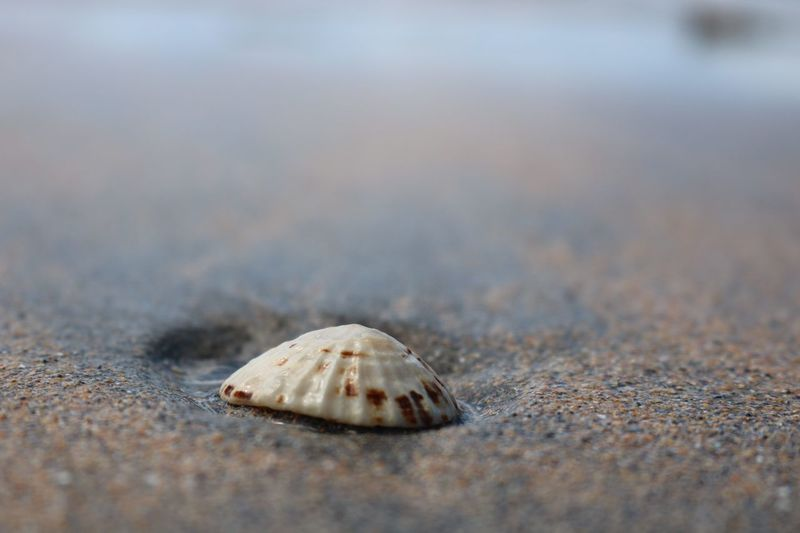Shell on the