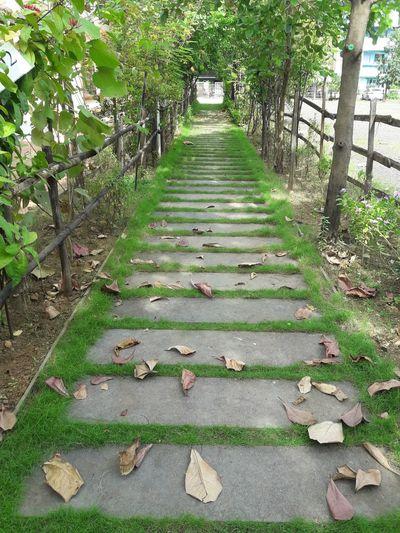 Green way Green Way