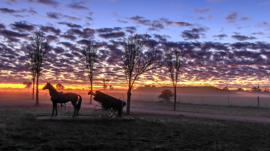 Sunrise over farmland EyeEm Best Shots The Week On EyeEm Bare Tree Beauty In Nature Cloud - Sky Day Domestic Animals Field Grass Horse Horse Cart Horsedrawn Landscape Livestock Mammal Men Nature One Animal Outdoors People Silhouette Sky Sunset Tree Working Animal