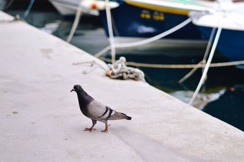 High angle view of bird perching on boat