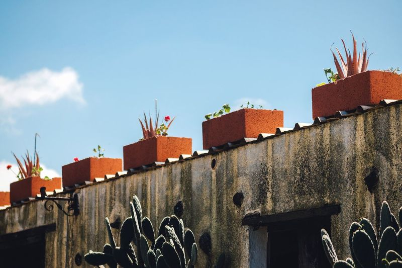 Pots on the roof Building Exterior Architecture Built Structure Low Angle View No People Multi Colored Outdoors Cactus Flower Sky Pot Potted Plant Roof Fuerteventura SPAIN Canary Islands Sunny Day Blue Sky Pattern In A Row Good Weather Tranquility My Year My View Always Be Cozy Blue Cactus