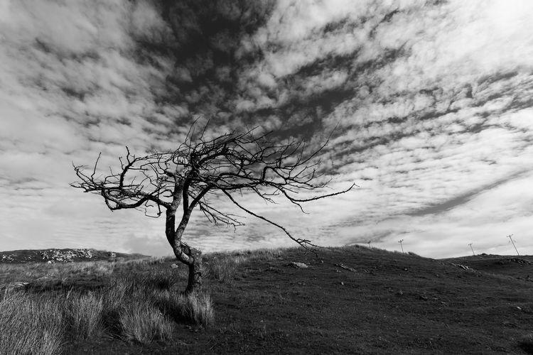The tree and thesky WeatherPro: Your Perfect Weather Shot Isle Of Lewis Scotlandsbeauty Scotland Autumn Blackandwhite Photography Cloud - Sky Sky Plant Beauty In Nature Nature Tree Tranquility Tranquil Scene No People Growth Landscape Environment Day Land Scenics - Nature Outdoors Low Angle View Field Non-urban Scene Branch