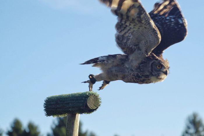 Day out EyeEm Selects Animals In The Wild Animal Themes One Animal Bird Animal Wildlife Day Bird Of Prey