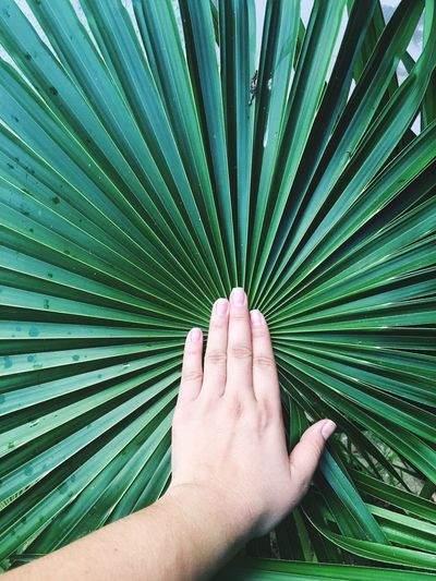 Cropped image of hand touching palm leaf