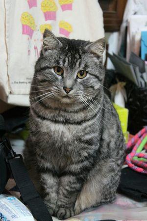 Il mio Ulisse ? Micio Ulisse Gattone Occhioni Cat♡