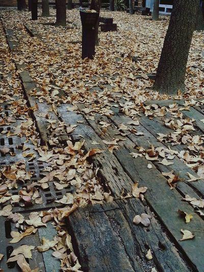 葉落凋零,藏不住冬的氣息。
