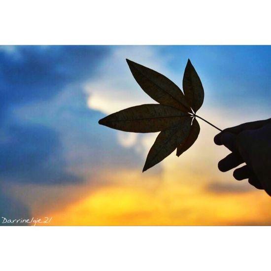 Leaf of faith. Di21 Infinité Leaf My Love