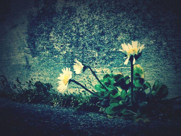 Flowers Denim Sidewalk Life Perserverance Stubborn