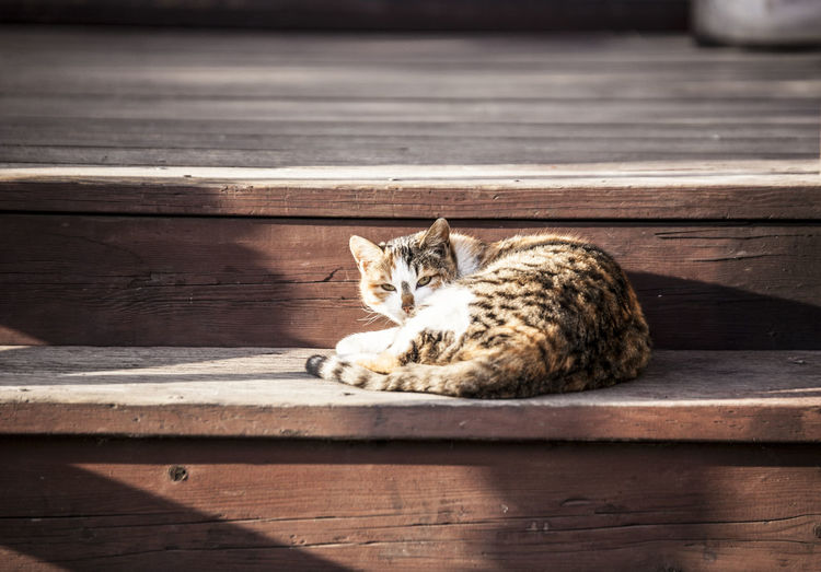 Mammal Feline Cat Pets Domestic Wood - Material Animal Themes Domestic Animals Animal Domestic Cat One Animal Relaxation Vertebrate Resting No People Day Sleeping Lying Down Table Whisker