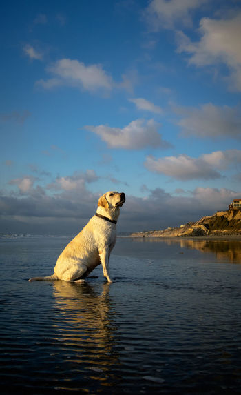 Side view of dog in sea against sky