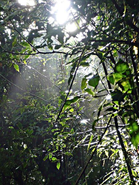 En Monteverde se pueden realizar unas fotografías increíbles Travel Photography Viaje A Costa Rica Fotografia De Viaje Travelling