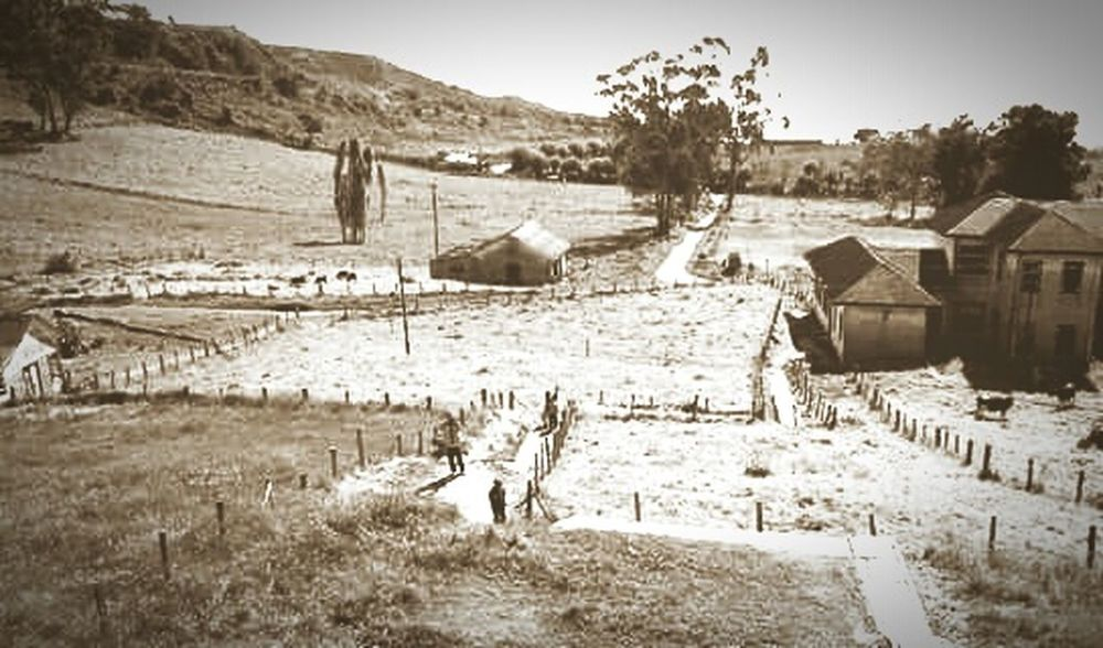 Old Pic  Old Buildings Trees Blackandwhite Sepia Cows Costa Rica