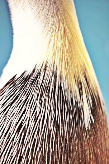 One Animal Animal Close-up Animal Themes Animal Body Part Focus On Foreground No People Animal Wildlife Bird Feathers Pelican