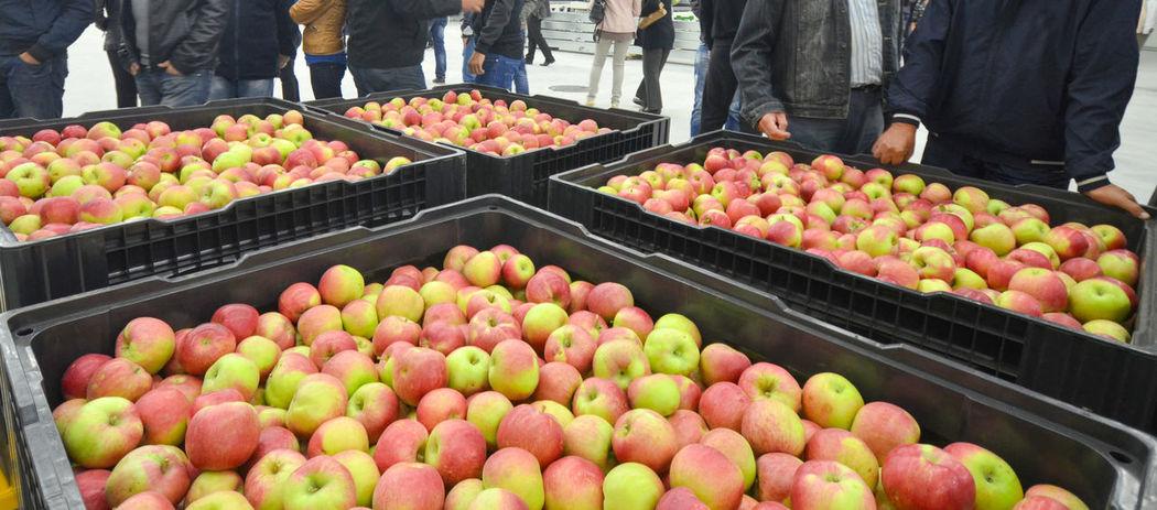 apples Apple Apple Fruit Apple Fruit Red Apple Container Orchard Red Apple Vitamin C