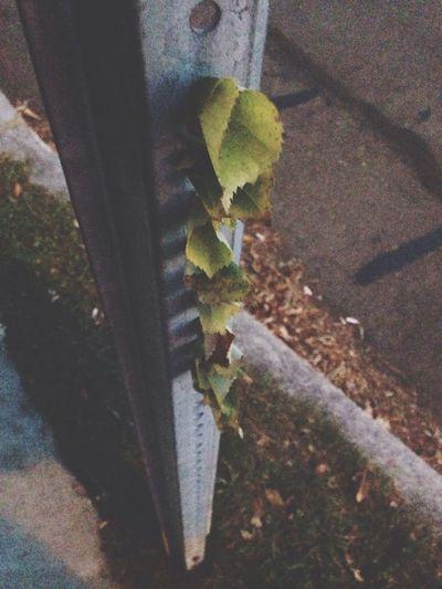 Making some street art Flowers,Plants & Garden