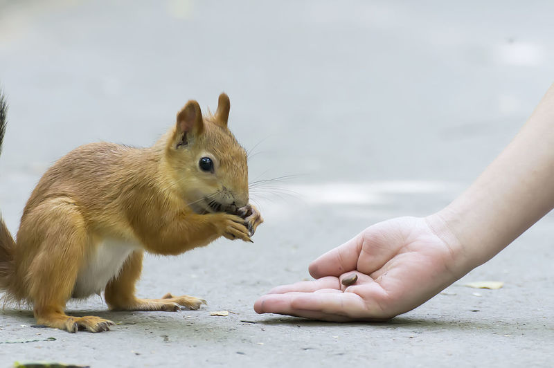 Cropped hand of woman feeding squirrel