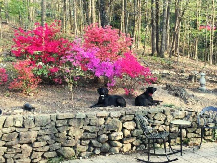 Love my pups 🐶 Puppies Dog Flowers Love