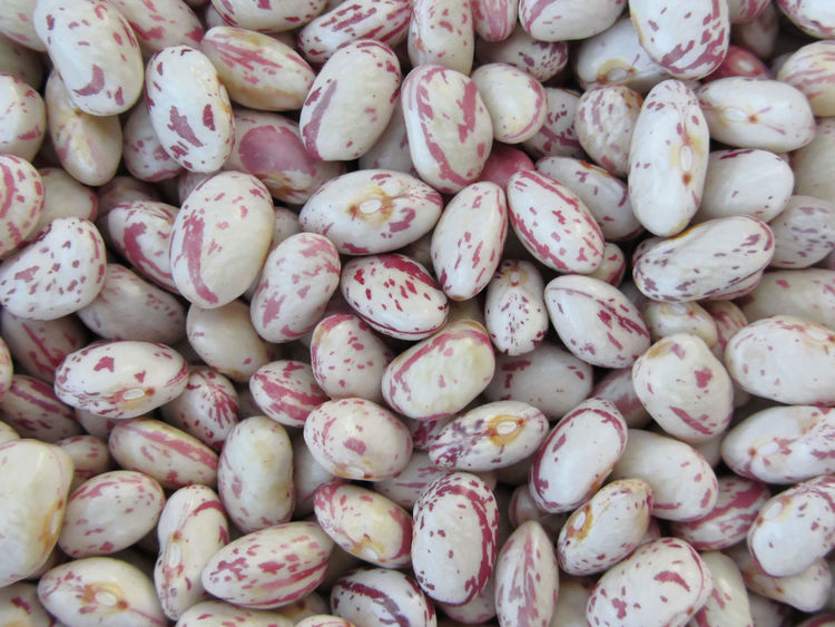 Bean rounded with red specks texture background. The beans are cultivated with biological agriculture in Tuscany, Italy Agriculture Background Bean Biological Borlotti Beans Cranberry Beans Delicious Grain Group Healthy Food Heap Horizontal Legume Many Organic Pinto Pinto Bean Plant Red Seed Shell Bean Texture Uncooked Vegetable Vegetarian Food
