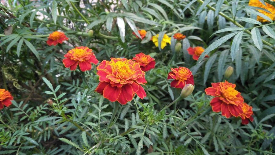AI Now! Flower Growth Nature Beauty In Nature Orange Color Green Color No People