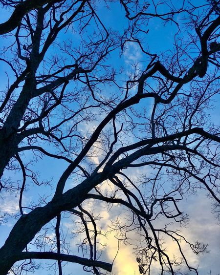 The City Light Branch Tree Low Angle View Sky Nature Bare Tree Tranquility Outdoors Beauty In Nature No People Scenics Day