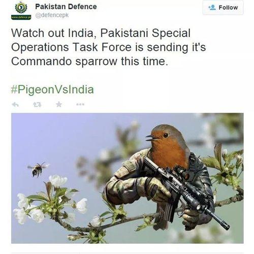 Lol xD! PigeonVSindia