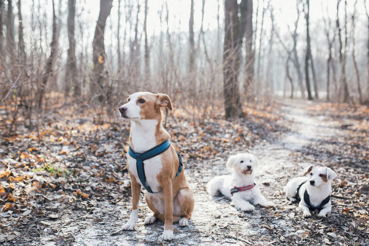Portrait of dogs standing in forest