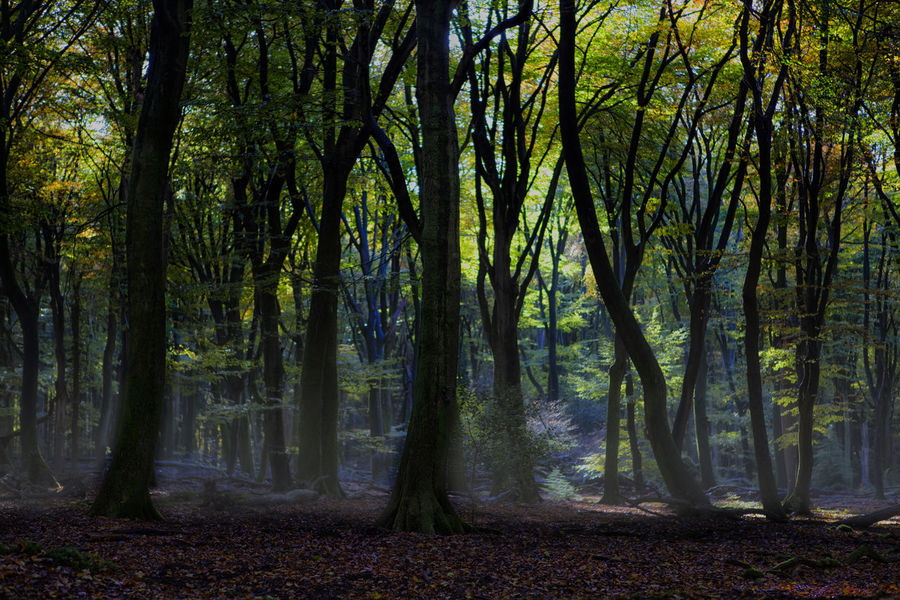 Forest Walk Landscape_Collection Lightfall Beauty In Nature Dark Woods Day Dingy Environment Forest Growth Idyllic Land Misty Forest Nature No People Non-urban Scene Outdoors Plant Remote Scenics - Nature Streaming Tranquil Scene Tranquility Tree Tree Trunk Trunk WoodLand