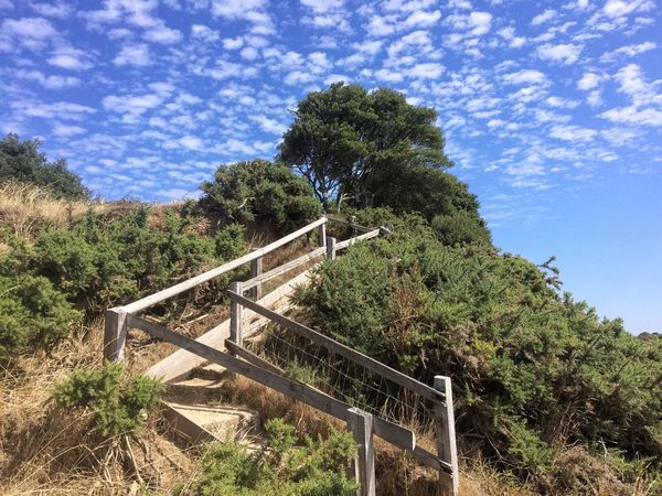 Way to 🏖 beach Summer ☀ Plant Tree Sky Low Angle View Nature Growth Cloud - Sky Railing Staircase Sunlight Day Outdoors No People Sunny Barrier