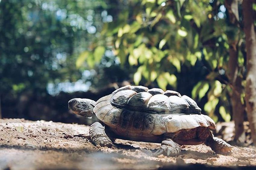🐢Infinity_wildnature Montaretina Be_one_natura H2o_natura Icu_nature_perfect_day Turtle Animals Soulnature_ Estaes_de_todo Estaes_natura Estaes_canarias Animal_sultans Wildlife_in_bl Love_canarias Animalplanet_fan Naturehippys Descubriendoigers Espacio_canario World_bestanimal Amateurs_shot Stalking_nature Ig_sharepoint Wildlifeplanet