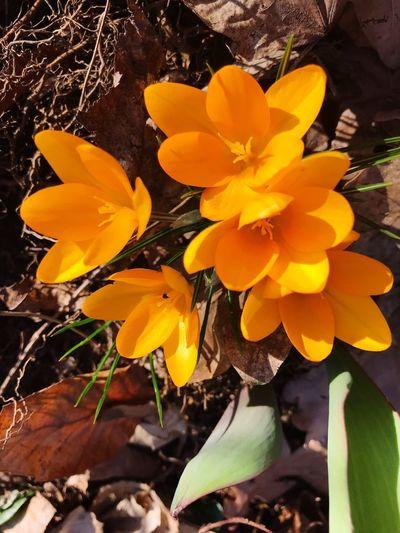 #fleurs Flower