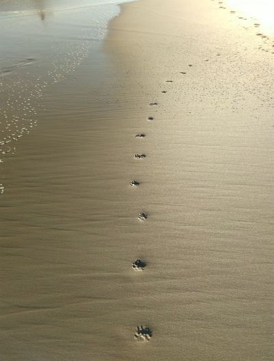 High angle view of footprints in water