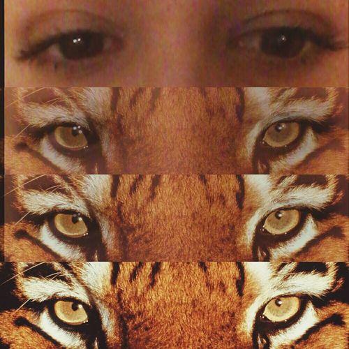 Tiger Augen Blicke ♥. .