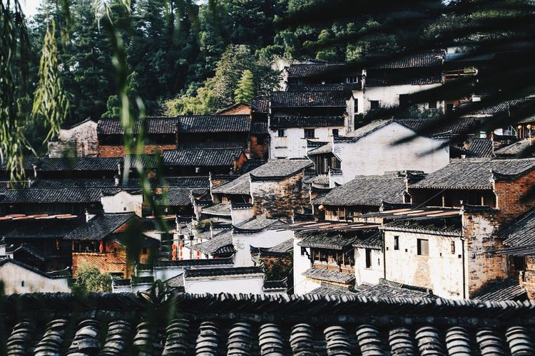 Tree Architecture Place Of Worship Religion Built Structure Building Exterior Roof No People Day Outdoors Sky Old Buildings Oldtown Shanghai Jiangxi