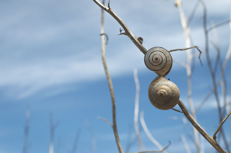 Close-up of snails on a twig against blue sky Snail Snails Snailshell Snail Shell Nature Nature's Diversities Animal Tiny Animal Small Animal Blue Blue Sky Nature Photography Showcase June Summer Negative Space Outdoors Close-up Animals Animals In The Wild Animal Photography Naturelovers Fine Art Photography Twig Branch Beach Perspectives On Nature
